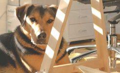 Animais em local de trabalho, pet friendly, agências do futuro e mais